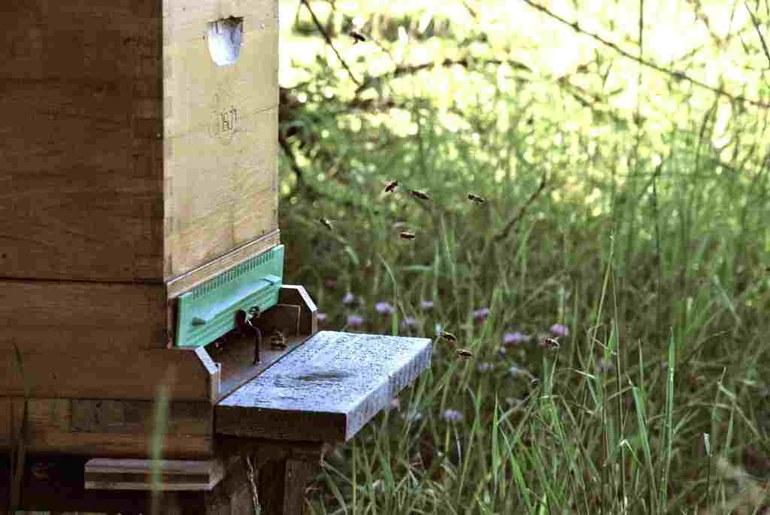 Bienen 1.jpg